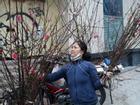 Chuyện phía sau những người trồng đào nhọc nhằn cả năm chỉ để 'chở Tết lên phố'