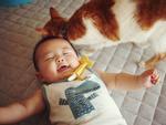 Tình bạn đẹp giữa nhóc tì 2 tuổi và chú mèo chảnh chọe