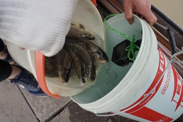 Sợ 'tắc đường', người dân mang cá chép thả tiễn ông Công ông Táo về trời sớm-10
