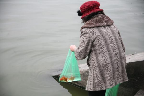 Sợ 'tắc đường', người dân mang cá chép thả tiễn ông Công ông Táo về trời sớm-11