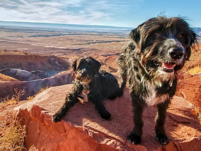 Chàng trai nghỉ việc để đưa cún cưng du ngoạn khắp nước Mỹ-2