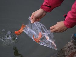 Ảnh HOT trong tuần: Nhiều người chết đuối chỉ vì phóng sinh cá tiễn Táo quân 'về trời'