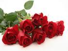 7 lợi ích sức khỏe và sắc đẹp từ hoa hồng