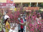 Mới 29 Tết lái buôn, nhà vườn đã xả hàng, bán chạy hoa, quất cảnh