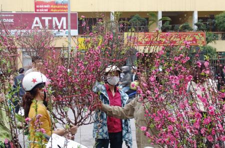 Mới 29 Tết lái buôn, nhà vườn đã xả hàng, bán chạy hoa, quất cảnh-2