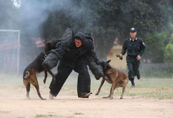 Chuyện cảm động về những chú chó nghiệp vụ-1