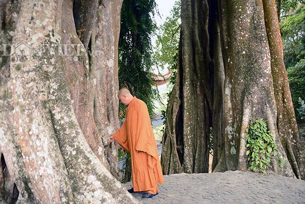 Ngày Tết, tìm phút tĩnh lặng nơi thiền đường Yên Tử-8