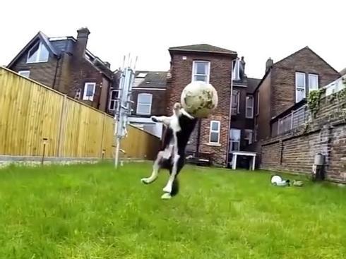 Clip: Những chú chó ngốc nghếch nhất thế giới