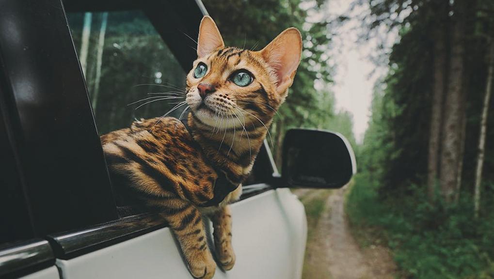 Mang thú cưng đi du lịch, tại sao không?-1