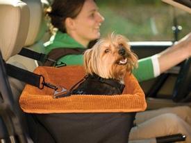Mang thú cưng đi du lịch, tại sao không?