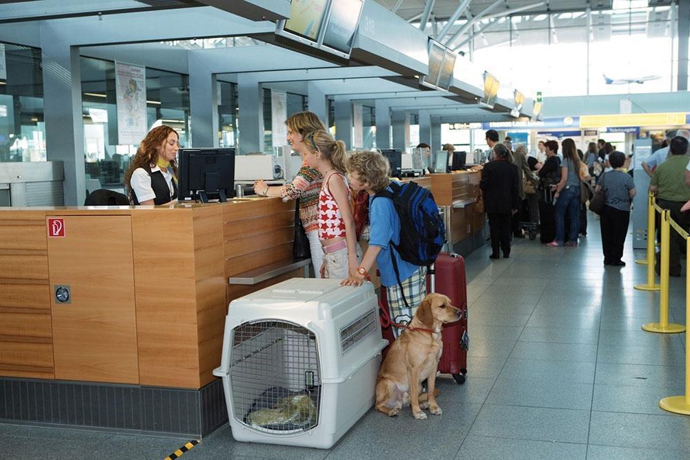 Mang thú cưng đi du lịch, tại sao không?-6