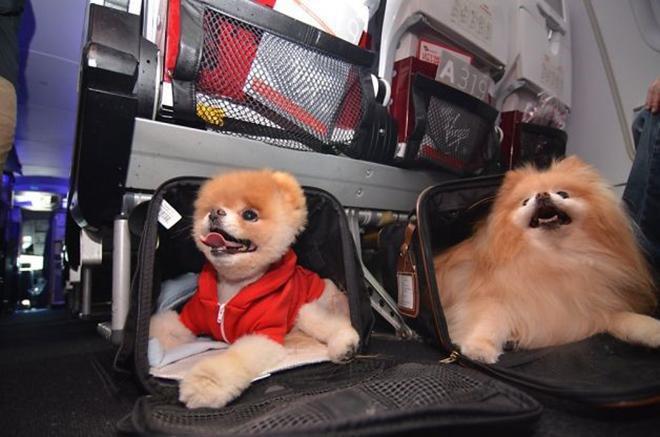 Mang thú cưng đi du lịch, tại sao không?-7