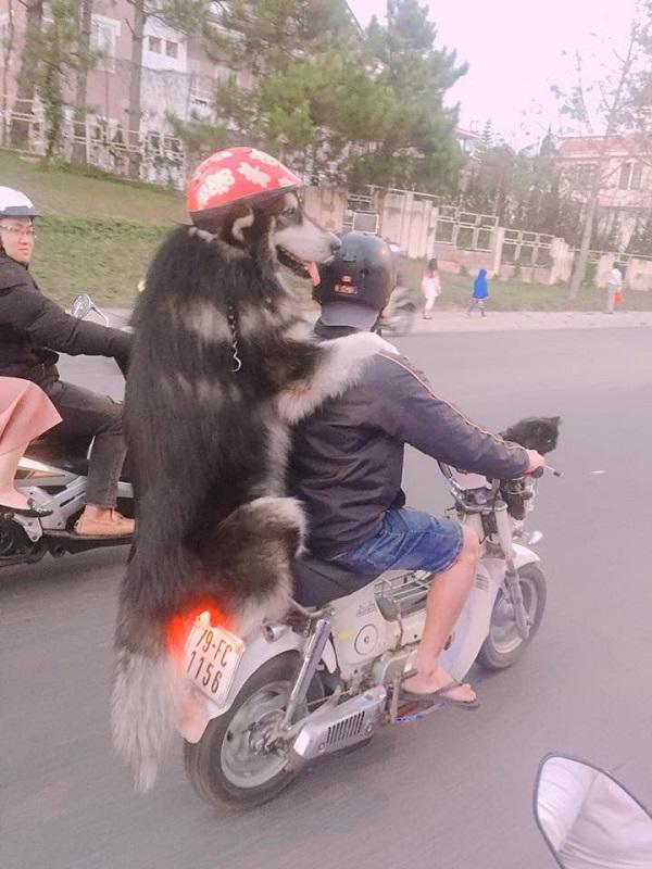 Chàng trai Đà Lạt đi xe cub chở thú cưng đội mũ bảo hiểm cực ngầu-2