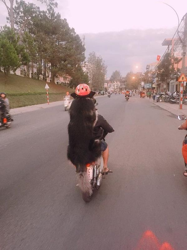 Chàng trai Đà Lạt đi xe cub chở thú cưng đội mũ bảo hiểm cực ngầu-3