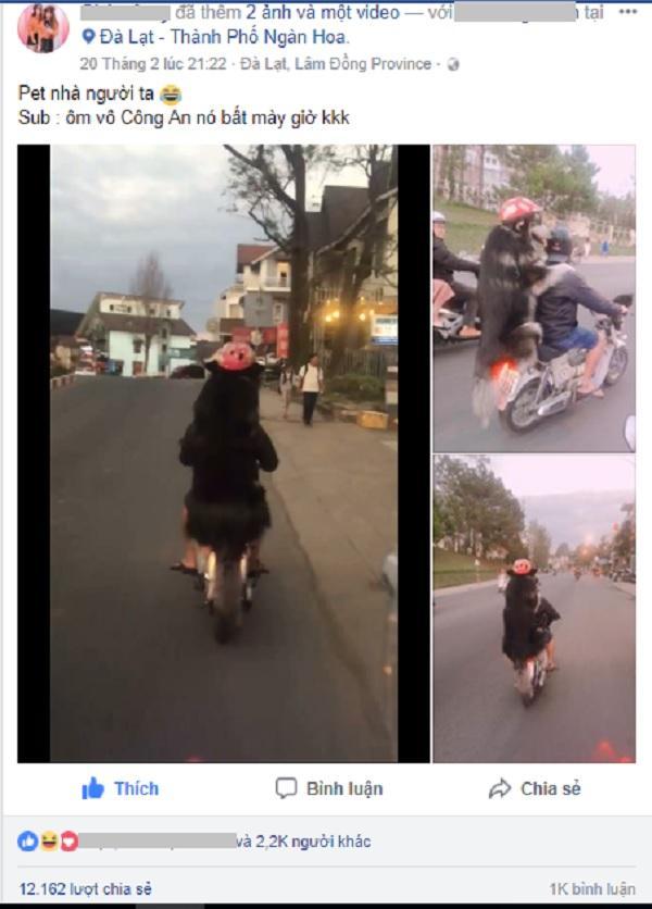Chàng trai Đà Lạt đi xe cub chở thú cưng đội mũ bảo hiểm cực ngầu-1