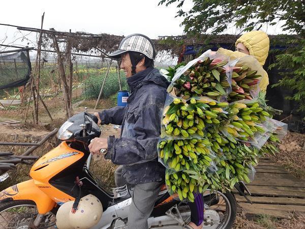 Hà Nội: Hoa ly nở rộ sau tết, dân khóc ròng vì bán chẳng ai mua-11