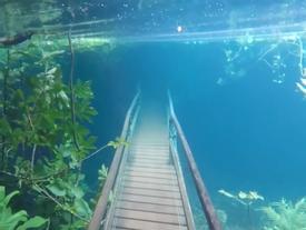 Ngập lụt biến khu bảo tồn thiên nhiên ở Brazil thành thủy cung