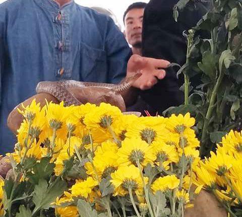 Dân ùn ùn xem mẹ con rắn thần xuất hiện trên mộ vô danh-4