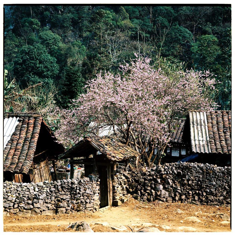 Bộ ảnh phim tuyệt đẹp về cao nguyên đá Hà Giang mùa xuân-4