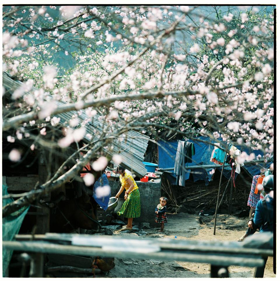 Bộ ảnh phim tuyệt đẹp về cao nguyên đá Hà Giang mùa xuân-5