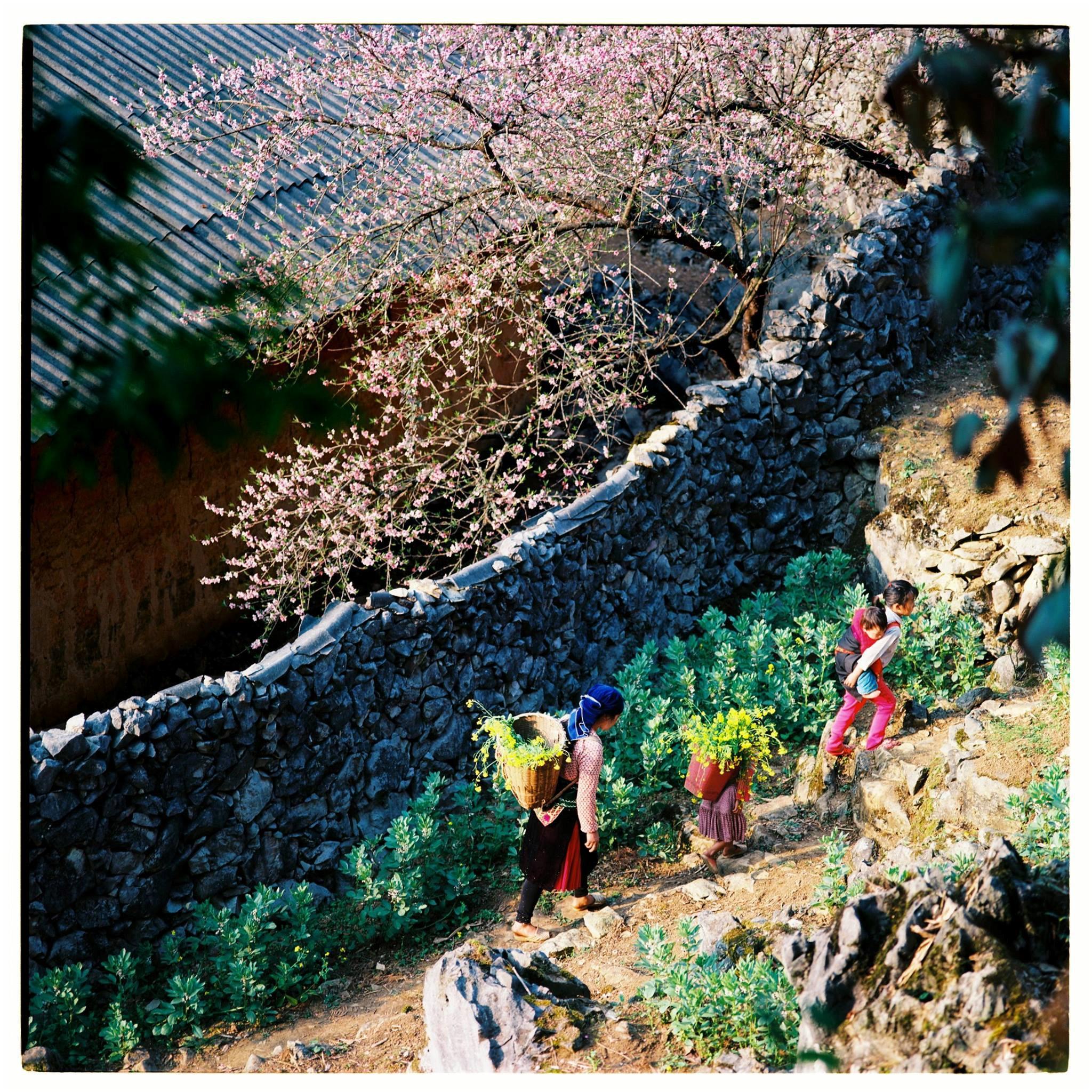 Bộ ảnh phim tuyệt đẹp về cao nguyên đá Hà Giang mùa xuân-8
