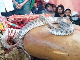 Cơ quan chức năng bắt 'rắn thần' ở Quảng Bình, người dân mới chịu về