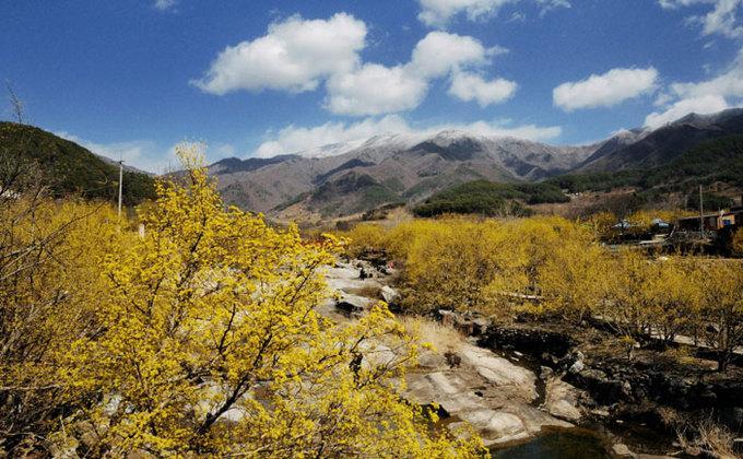 9 lễ hội hoa mùa xuân không thể bỏ qua ở Hàn Quốc-2