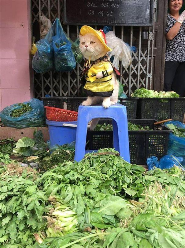 Chú mèo Việt gây bão mạng quốc tế bởi thần thái siêu ngầu-7