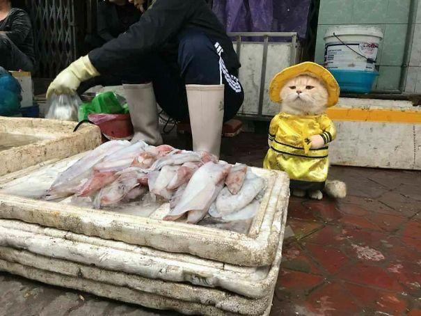 Chú mèo Việt gây bão mạng quốc tế bởi thần thái siêu ngầu-2