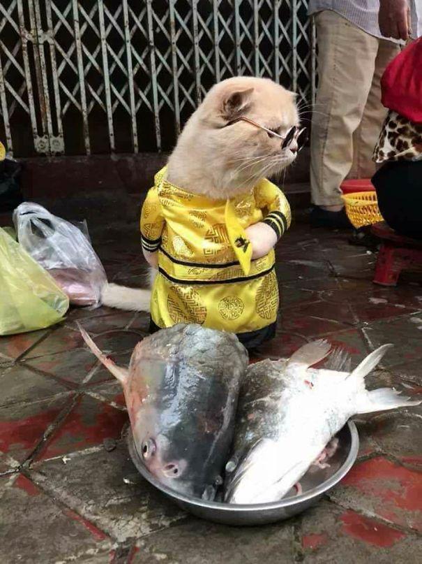 Chú mèo Việt gây bão mạng quốc tế bởi thần thái siêu ngầu-3