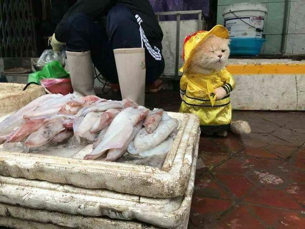 Chú mèo Việt gây bão mạng quốc tế bởi thần thái siêu ngầu-4