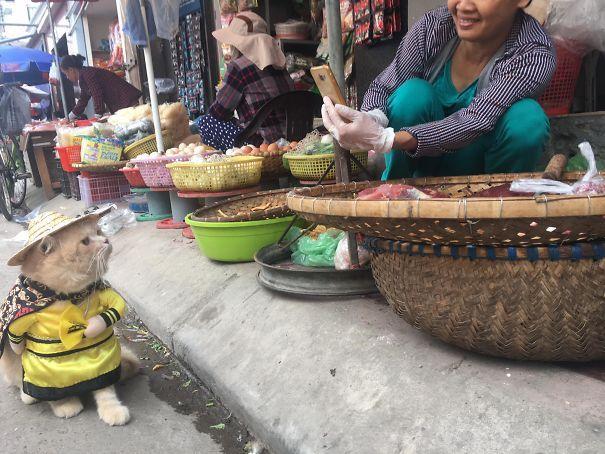 Chú mèo Việt gây bão mạng quốc tế bởi thần thái siêu ngầu-5