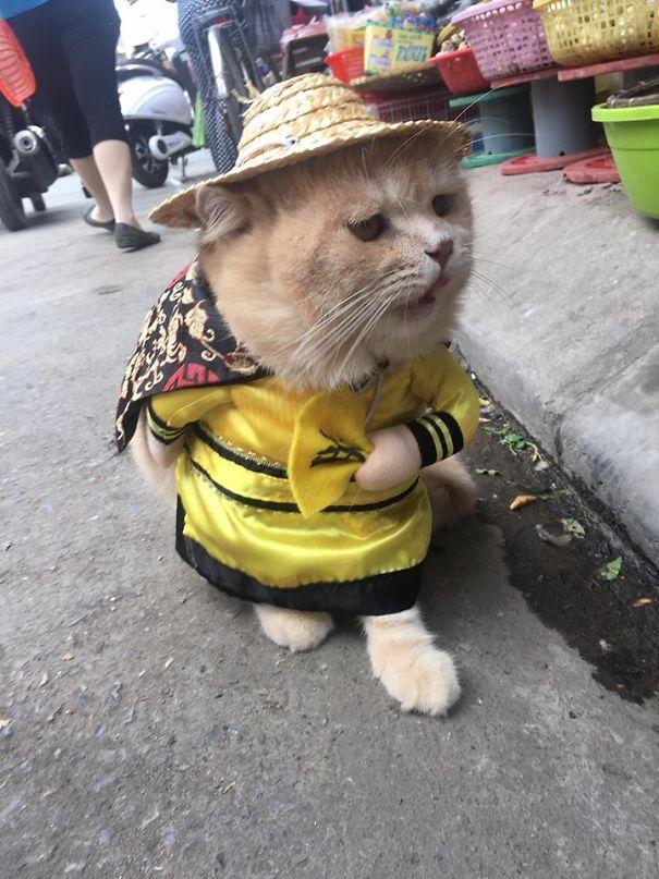 Chú mèo Việt gây bão mạng quốc tế bởi thần thái siêu ngầu-9