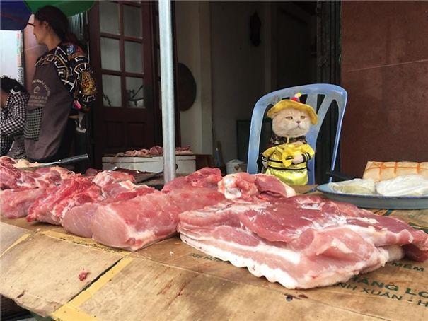Chú mèo Việt gây bão mạng quốc tế bởi thần thái siêu ngầu-6