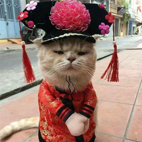 Chú mèo Việt gây bão mạng quốc tế bởi thần thái siêu ngầu-10