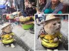 Chú mèo Việt gây bão mạng quốc tế bởi thần thái siêu 'ngầu'