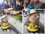 CHUYỆN LẠ: Chú chó gây sốt vì khuôn mặt giống nhiều sao nam Hollywood-8