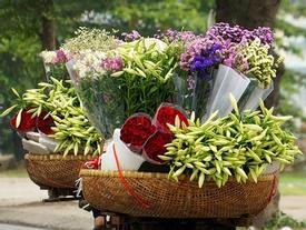 Nao lòng với một Hà Nội đẹp dịu dàng các mùa hoa tháng 3