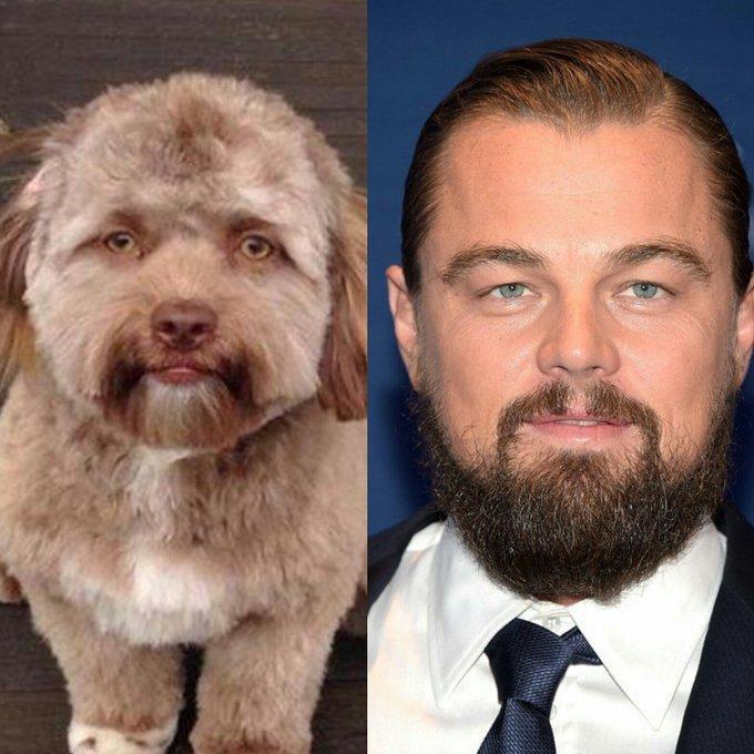 CHUYỆN LẠ: Chú chó gây sốt vì khuôn mặt giống nhiều sao nam Hollywood-4