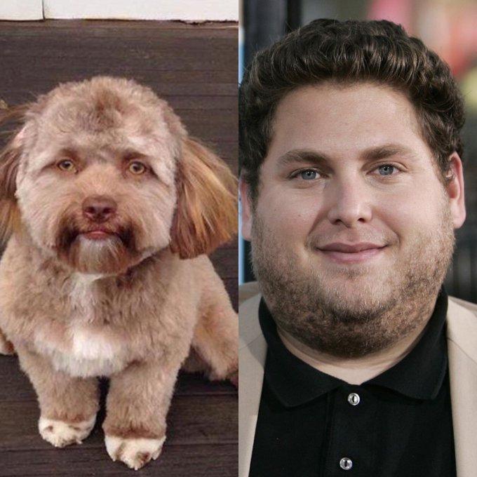 CHUYỆN LẠ: Chú chó gây sốt vì khuôn mặt giống nhiều sao nam Hollywood-6