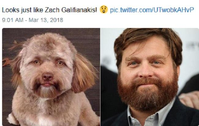CHUYỆN LẠ: Chú chó gây sốt vì khuôn mặt giống nhiều sao nam Hollywood-7