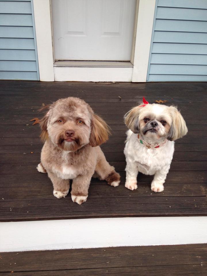 CHUYỆN LẠ: Chú chó gây sốt vì khuôn mặt giống nhiều sao nam Hollywood-3