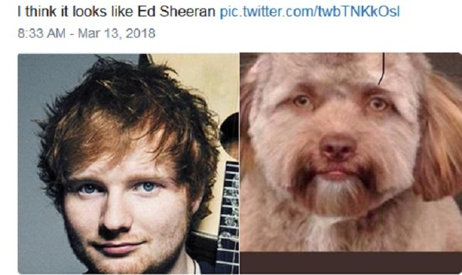 CHUYỆN LẠ: Chú chó gây sốt vì khuôn mặt giống nhiều sao nam Hollywood-5