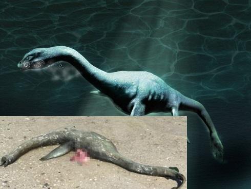 CHUYỆN LẠ: Sinh vật giống 'quái vật hồ Loch Ness' dạt vào bờ Georgia