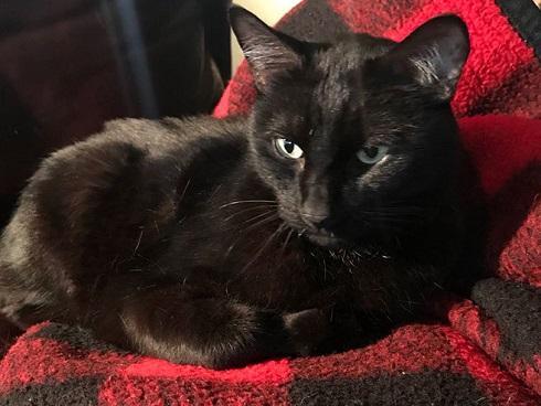 'Lạc trôi' 5 năm, chú mèo trở về trong sự ngỡ ngàng của cô chủ