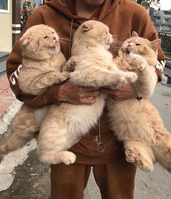 Chú mèo tên Chó và đàn con khiến dân mạng thích thú