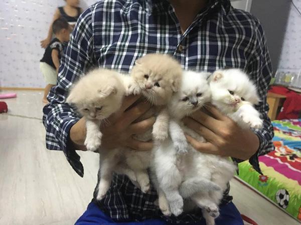 Đàn con của Chó khi còn nhỏ, hai bé lông trắng và 2 bé lông vàng giống bố