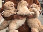 Biểu cảm chết cười của chú mèo tên Chó khi thấy hai đứa con giống mình y đúc