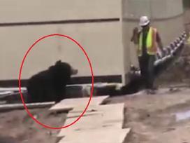 Người đàn ông 'chạy mất dép' khi gặp gấu giữa đường