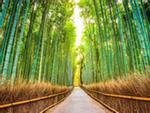 Vì sao Nhật đắt đỏ nhưng đáng tới một lần trong đời?